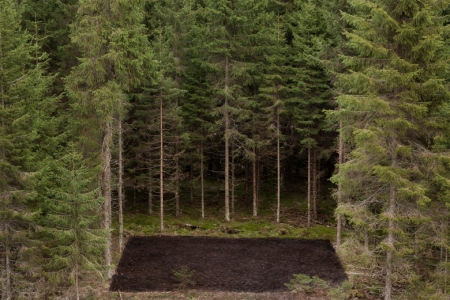 Forest_Square_II