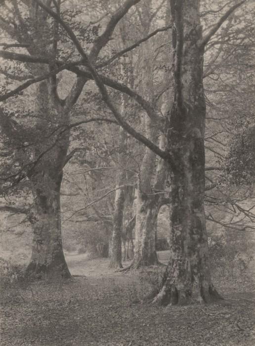 Frederick H. Evans. In Redland Woods: Surrey. 1894.